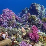 Satun Dive Resort